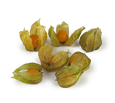 Physalis for decoration